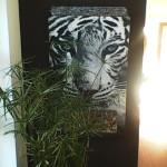 tygr blíž